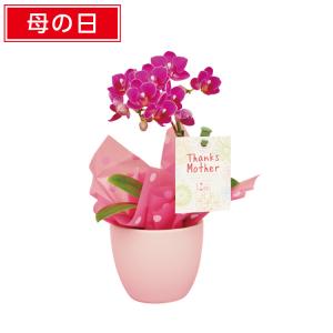 ファミマの母の日&父の日ギフト2019!花・食べ物などジャンル別3選!2